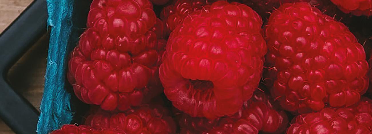 Raspberries500 x 180