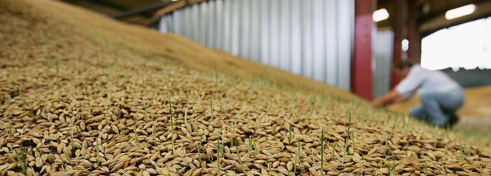 Barn-Grain-1